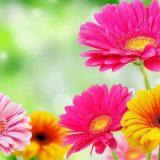 spring-flowers-6-min